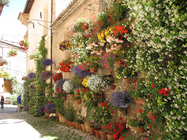 spello-flowers-3