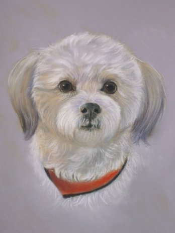 """Milo"" from Pamela Jaffe Portraits"