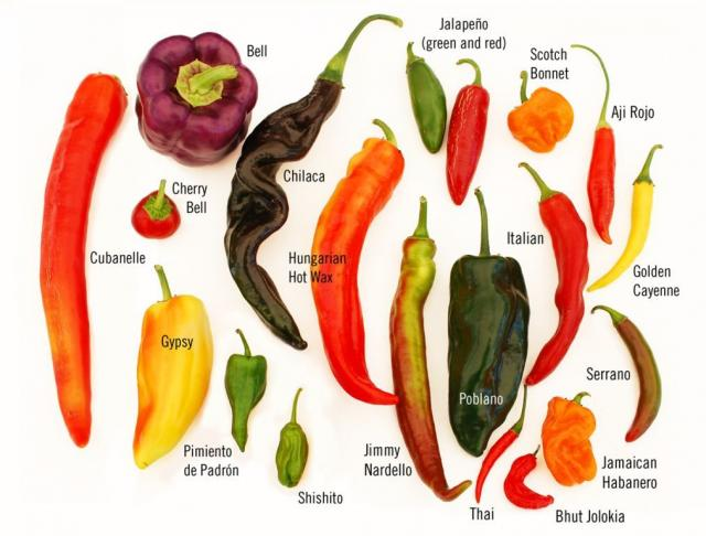 types_of_peppers.preview